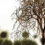 Paesaggio-con-Alberi-02-particolare